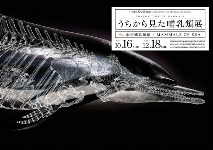 Japanese Illustrator Exposes the Composition of Mammals