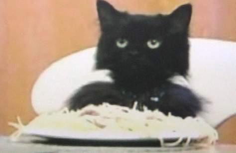 Feed The Cat II
