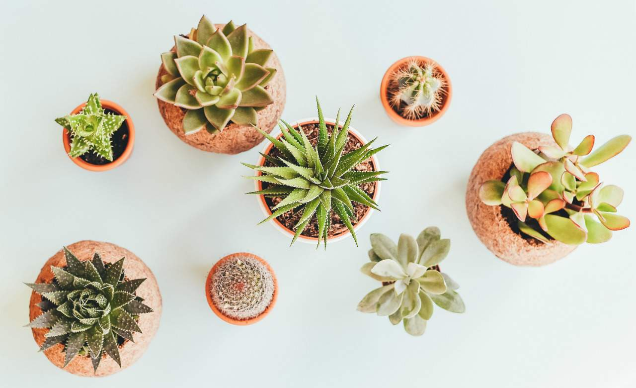 The Best Places To Buy Plants In Sydney Concrete Playground Sydney