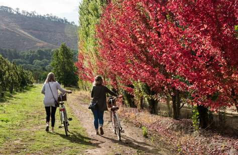 TOP AUTUMNAL SIGHTS TO SEE IN REGIONAL VICTORIA THIS SEASON