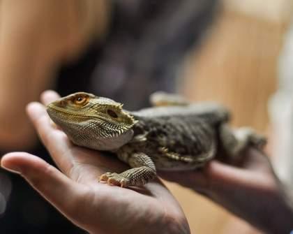 Exotic Creatures Petting Zoo