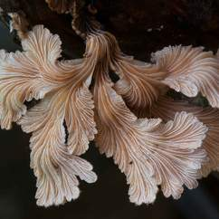 'The Kingdom: How Fungi Made the World' Screening and Q&A