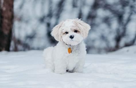Snow4Dogs