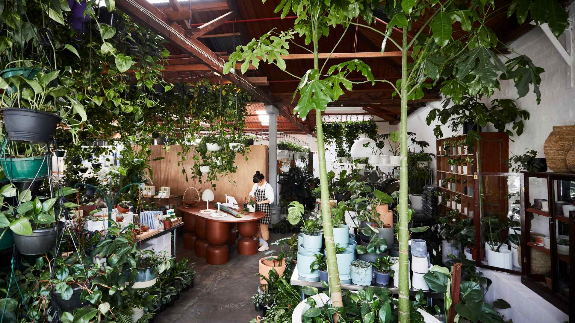 The Best Places to Buy Plants in Melbourne